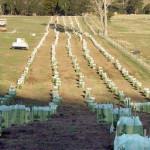 Water-Tube-Large-Farming-1-NG